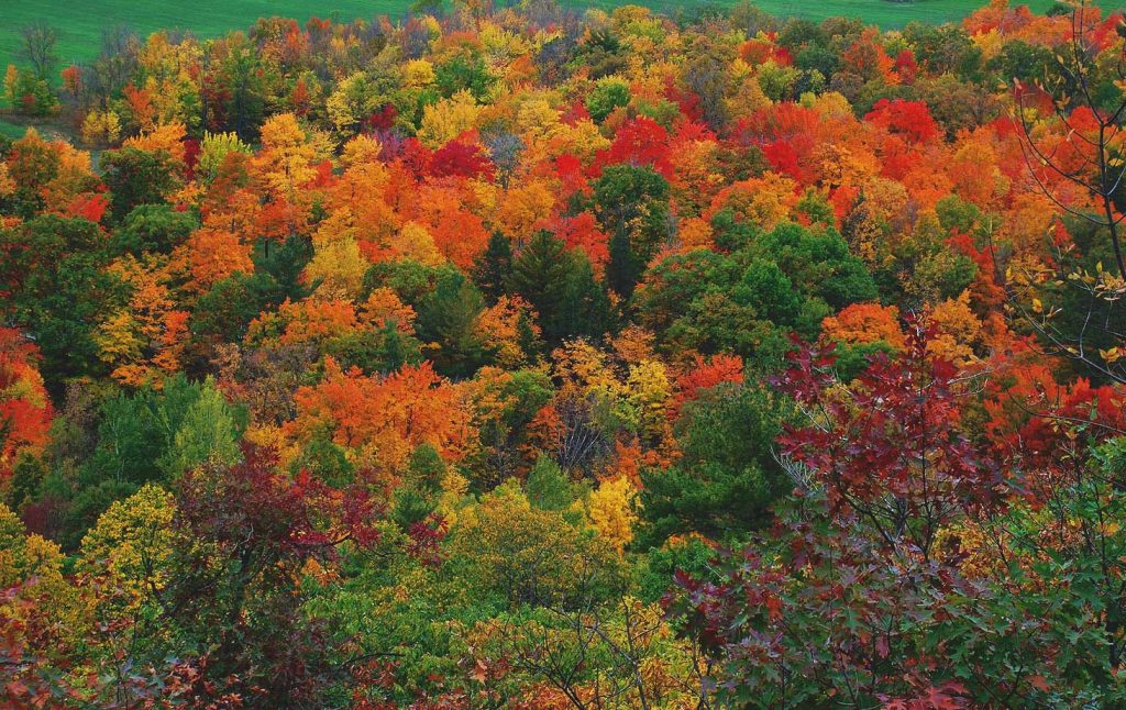 Fall 2017: Fall Colour Getaway to The Valley Special